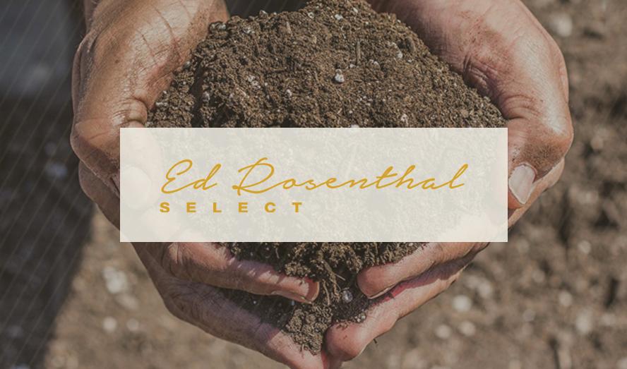 Ed Rosenthal Tri-Fold Brochure Design